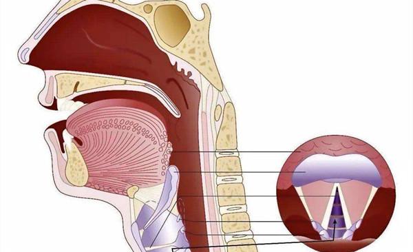 喉炎是什么原因引起的